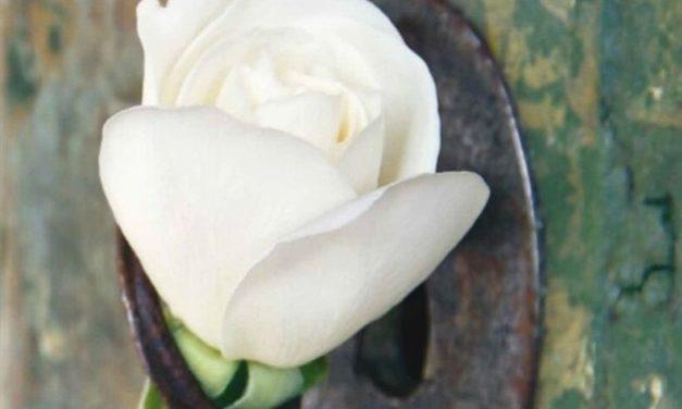 Caritas, la cura dei poveri e la tutela della casa comune